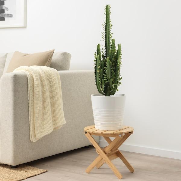 IKEA EUPHORBIA Potted plant