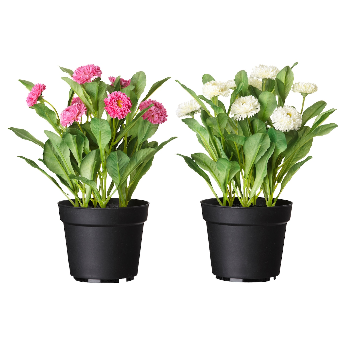 fejka artificial potted plant common daisy assorted colours 12 cm ikea. Black Bedroom Furniture Sets. Home Design Ideas