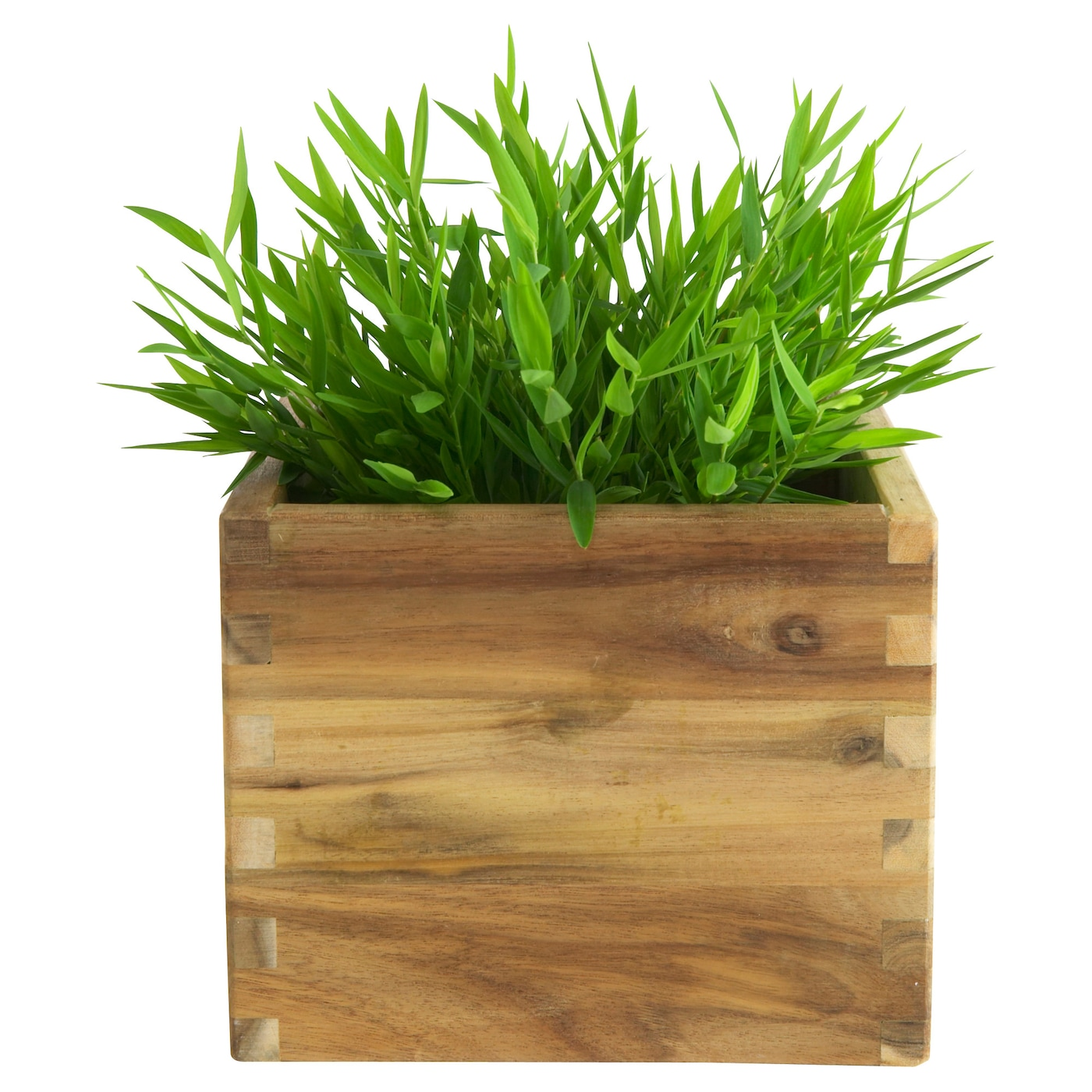 Fejka artificial potted plant house bamboo 10 cm ikea - Ikea plantas artificiales ...