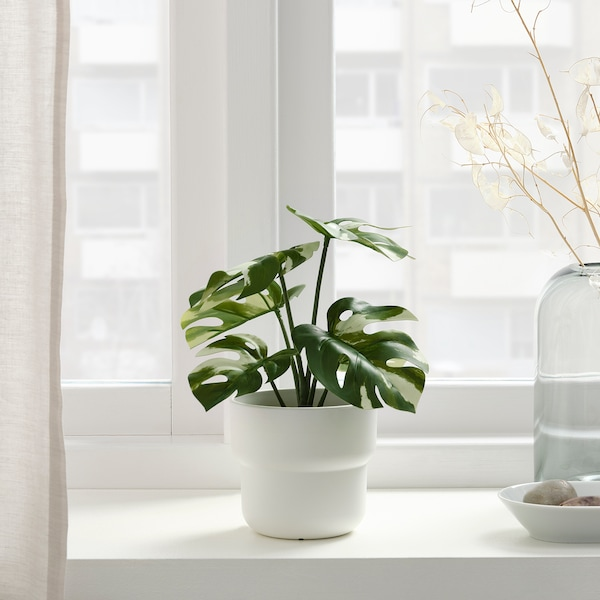 FEJKA Artificial potted plant, in/outdoor Monstera, 9 cm
