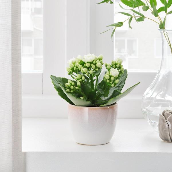 GRÄDDÄPPLE Plant pot, in/outdoor pink/white, 6 cm