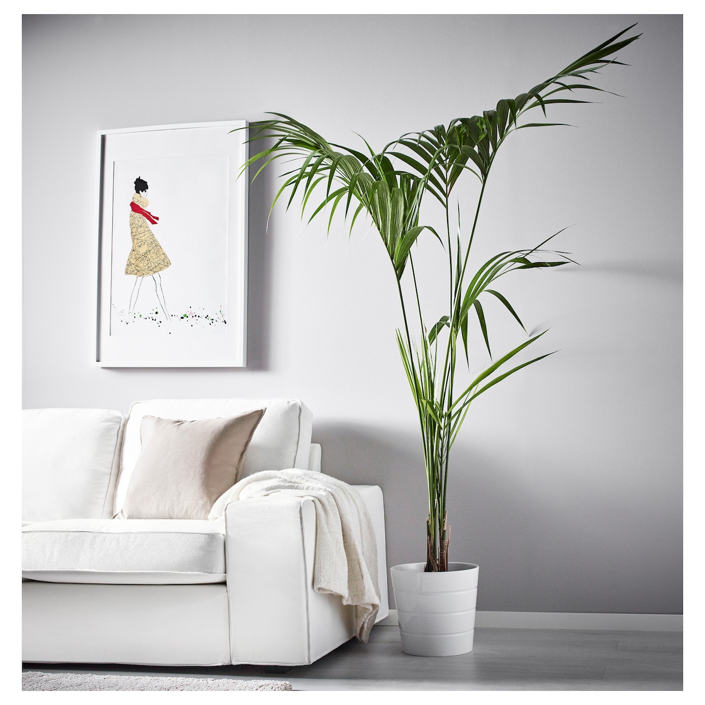 IKEA HOWEA FORSTERIANA potted plant