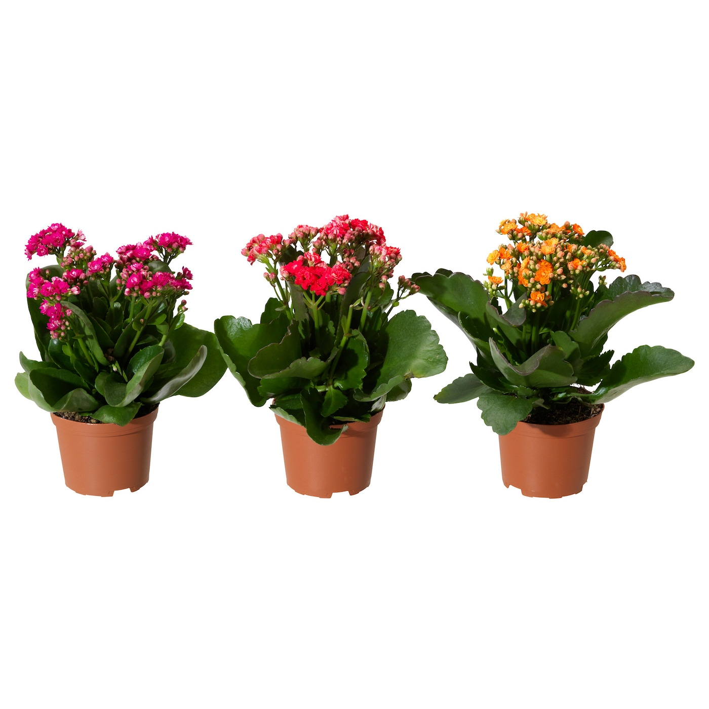 Plants cacti house plants potted plants ikea for Flower pots with plants