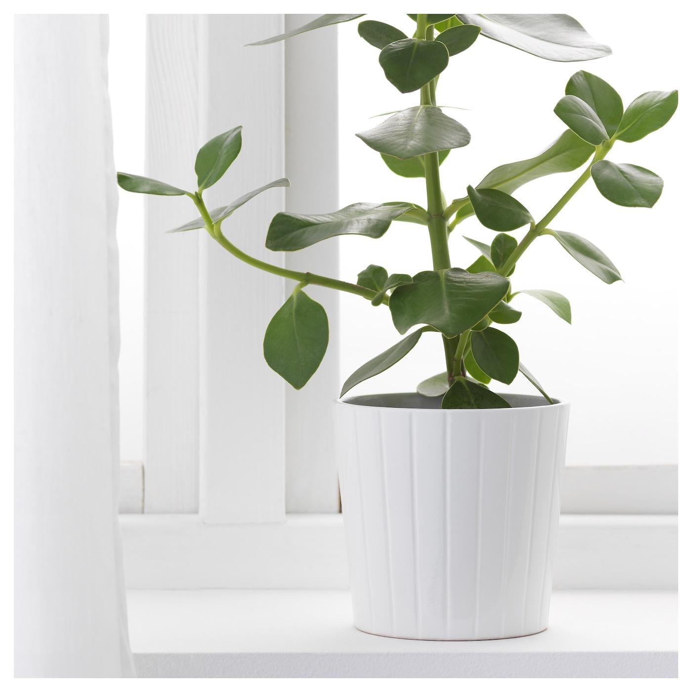 kardemumma plant pot white assorted patterns 12 cm ikea