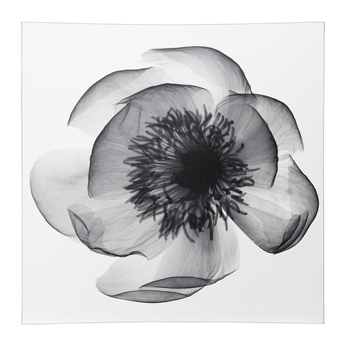 KLÖXHULT Picture, X-ray of peony