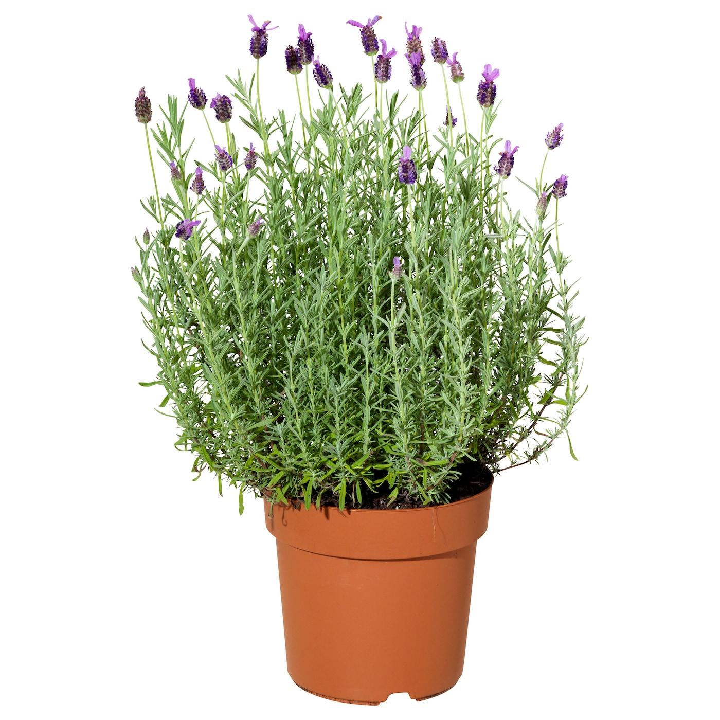 gr sl k plant pot in outdoor oval galvanised 21 cm ikea. Black Bedroom Furniture Sets. Home Design Ideas