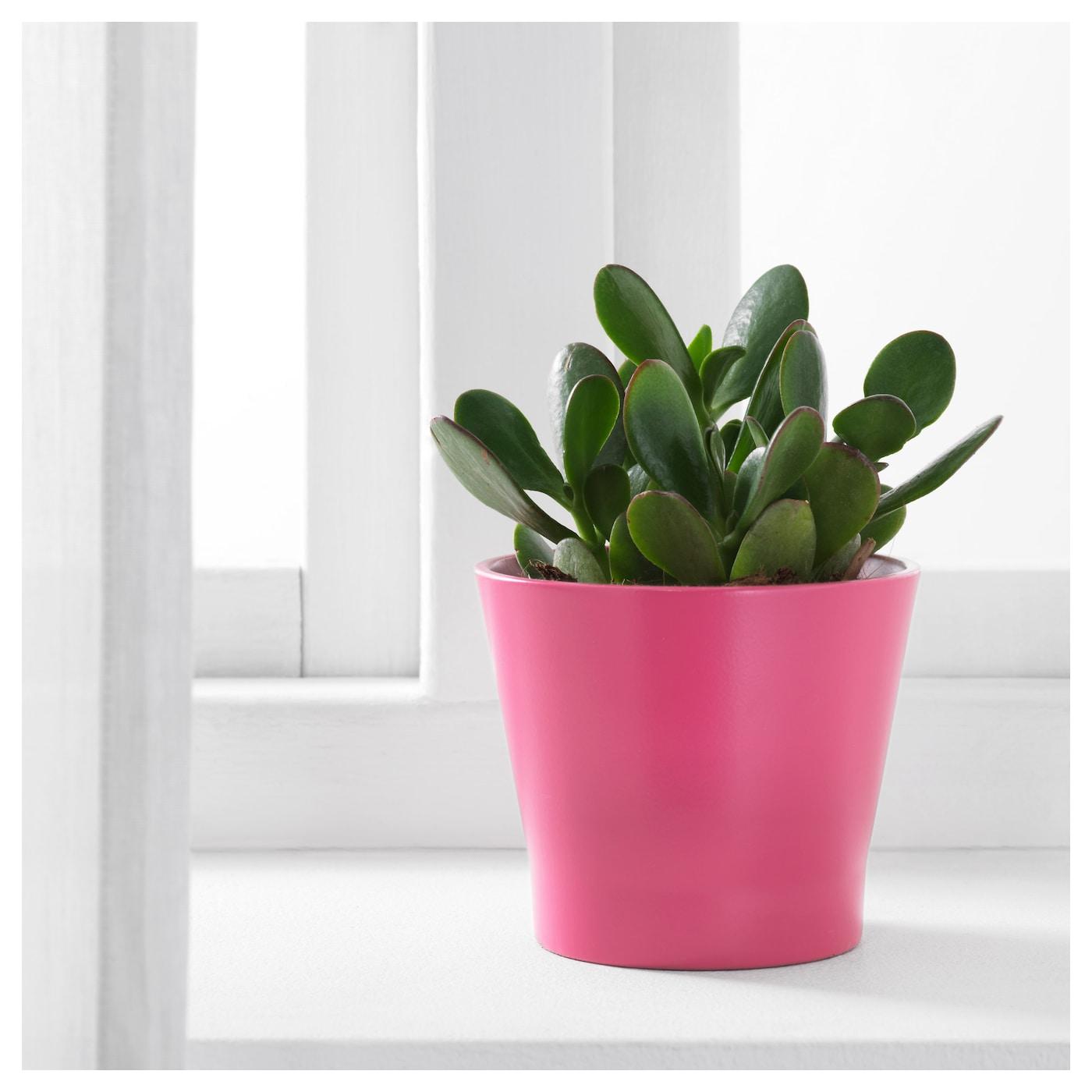 Papaja plant pot dark pink 9 cm ikea ikea papaja plant pot lacquered interior makes the plant pot waterproof mightylinksfo