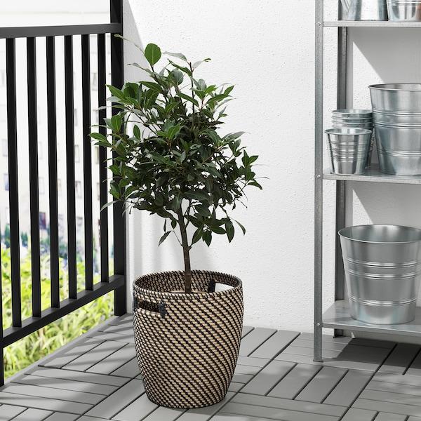 IKEA RÅGKORN Plant pot