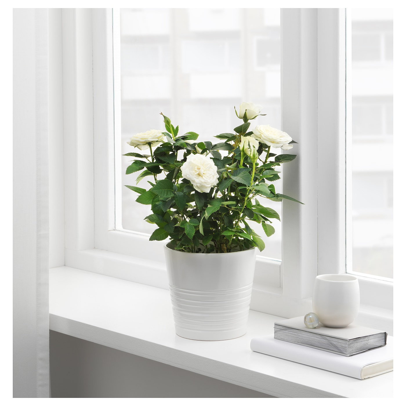 IKEA ROSA potted plant