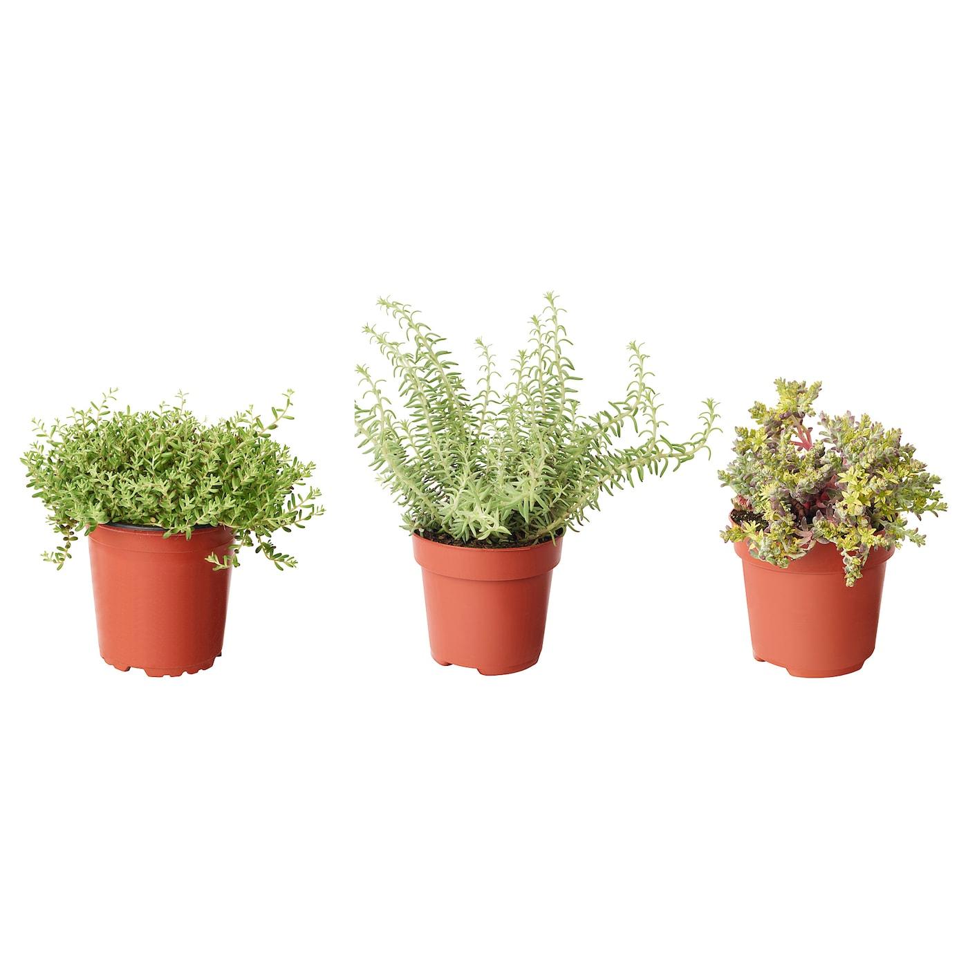 Plants cacti house plants potted plants ikea - Plantas colgantes de exterior ...