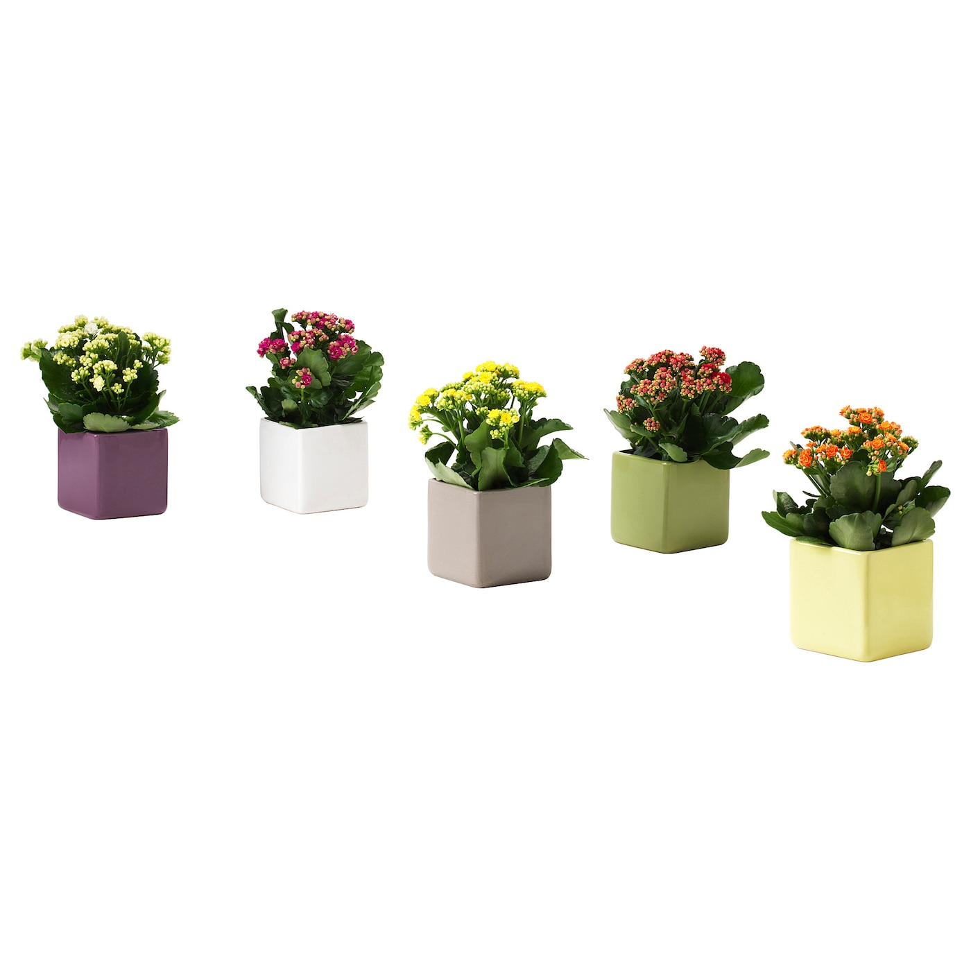 IKEA STOLLIG potted plant with pot