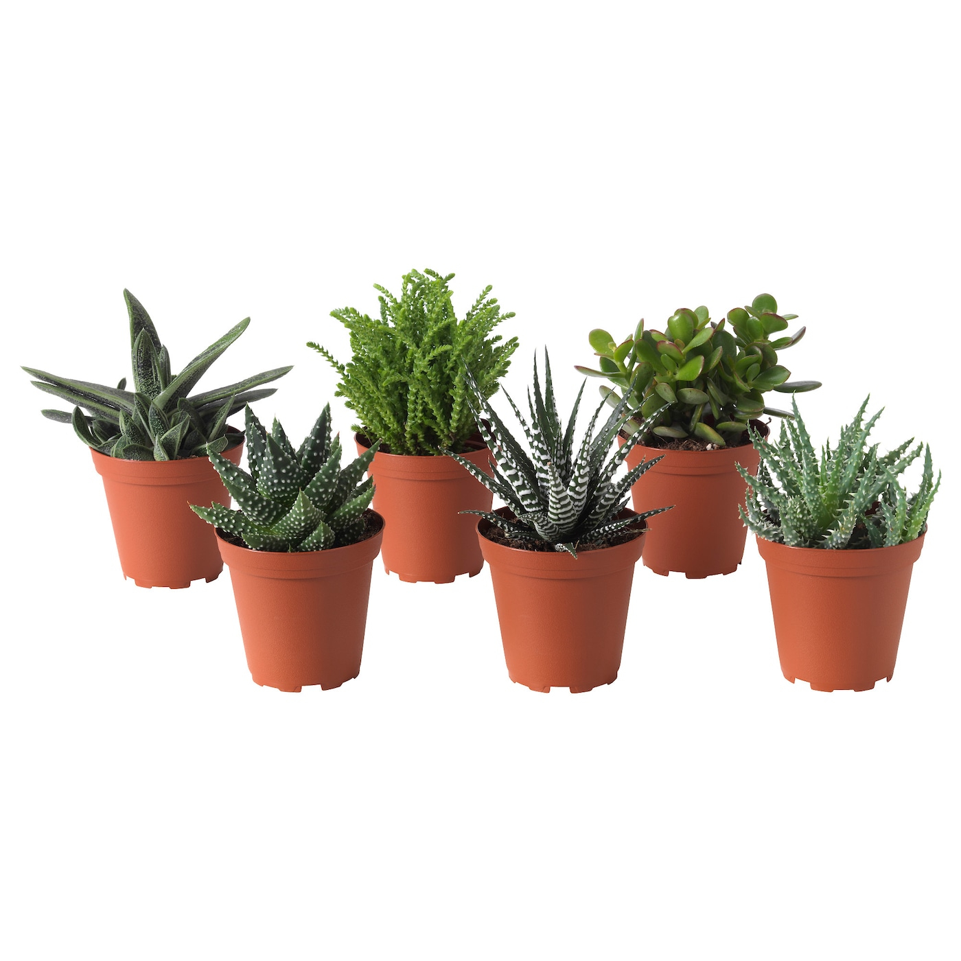 succulent potted plant assorted 9 cm ikea. Black Bedroom Furniture Sets. Home Design Ideas
