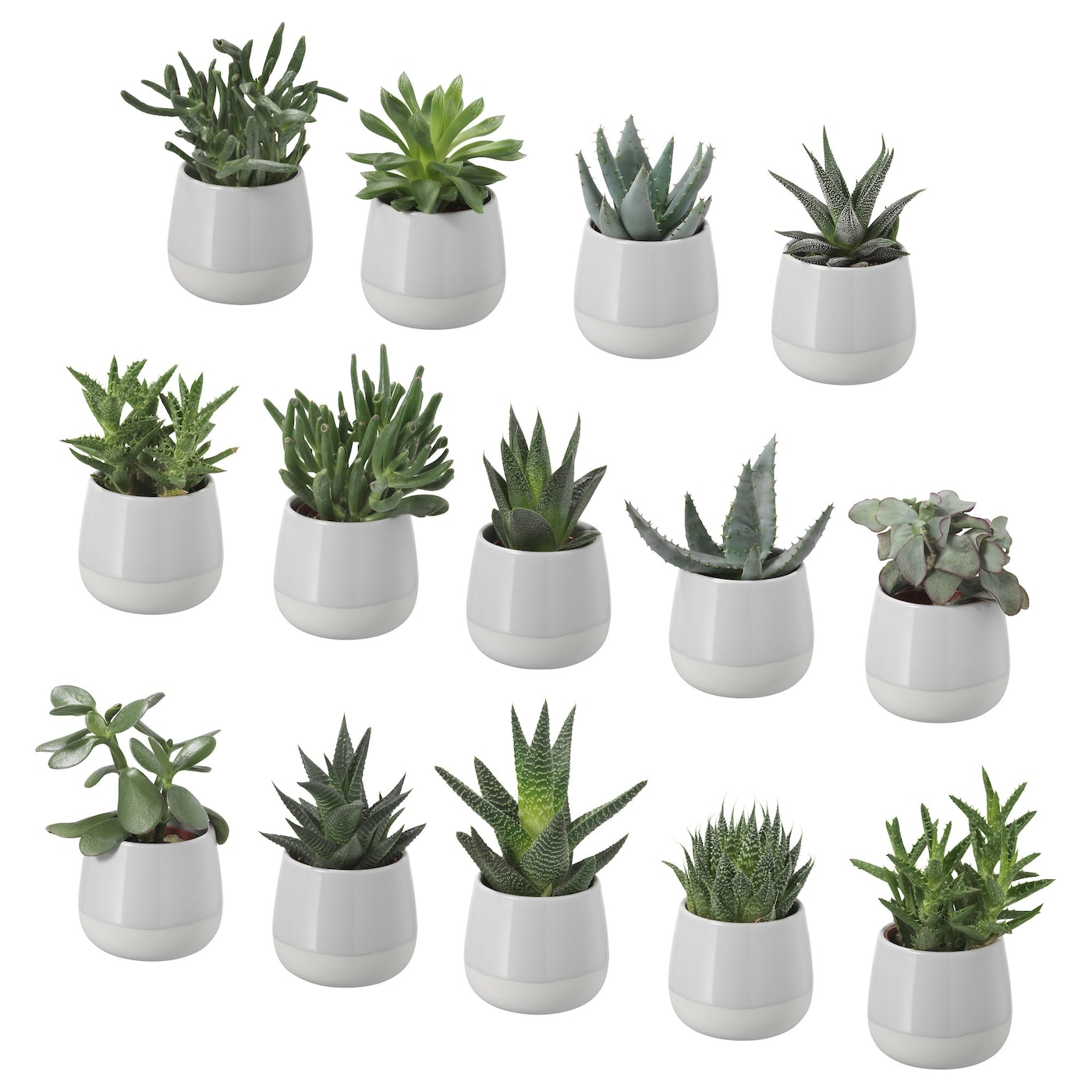 Succulent potted plant with pot grey 6 cm ikea for Ikea plantes