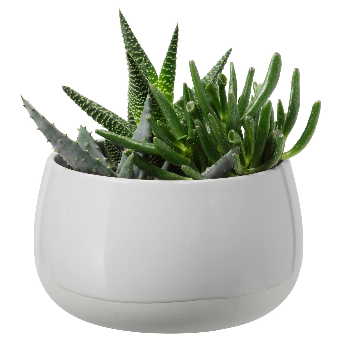 Succulent Potted Plant With Pot Grey 12 Cm Ikea