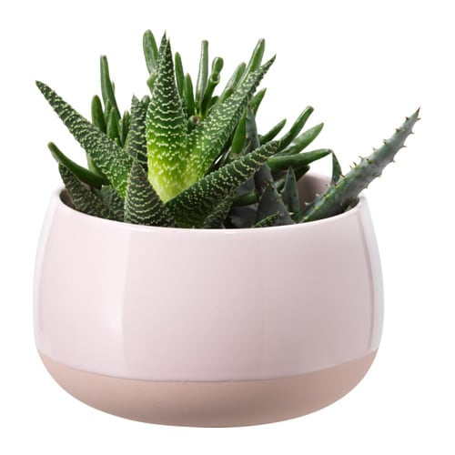 Succulent potted plant with pot pink 12 cm ikea for Ikea plantes