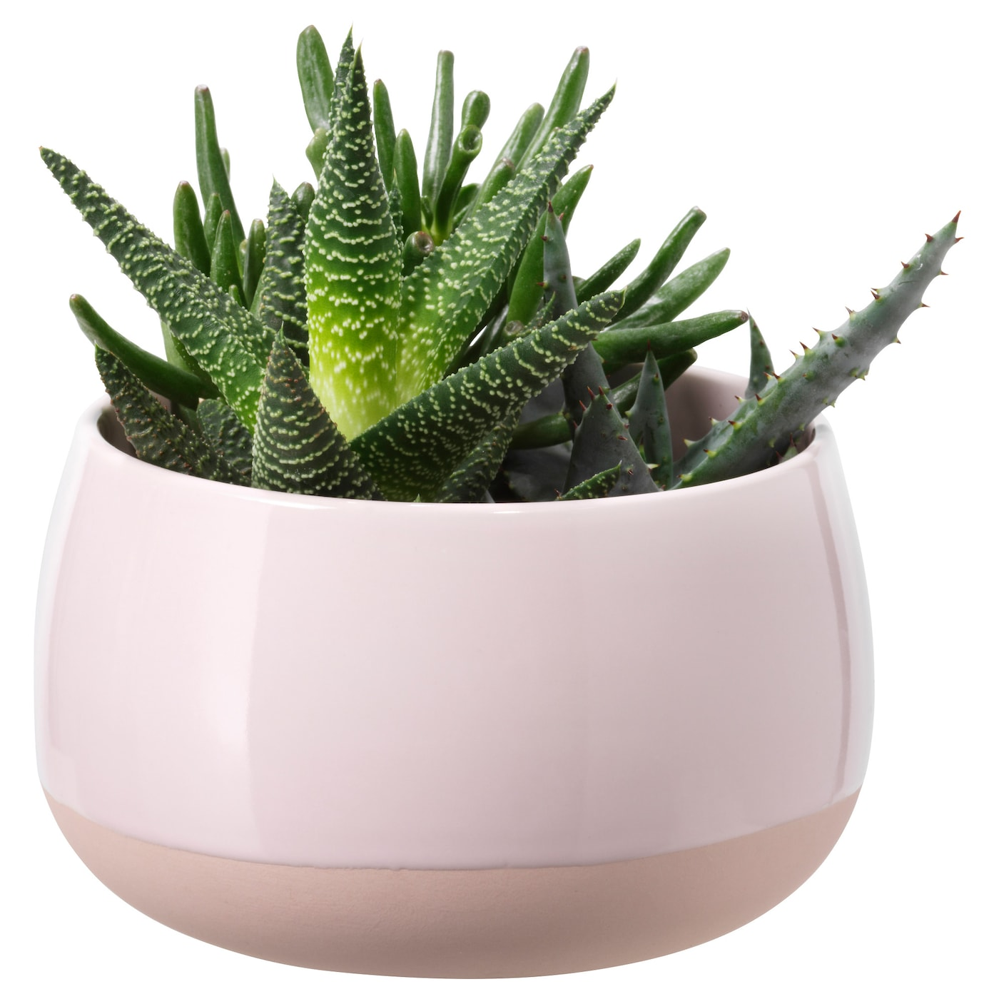 succulent potted plant with pot pink 12 cm ikea. Black Bedroom Furniture Sets. Home Design Ideas