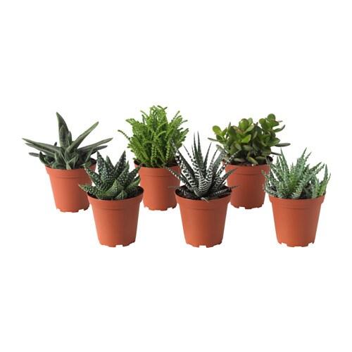 Succulent potted plant ikea for Plant de pot exterieur