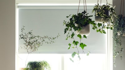 Block-out blinds