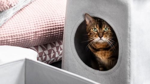 Cats furniture