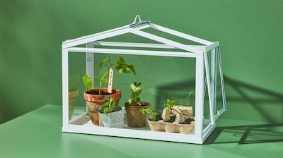 Аксесуари для вирощування рослин