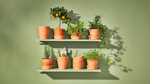 أواني زرع ونباتات للأماكن الخارجية