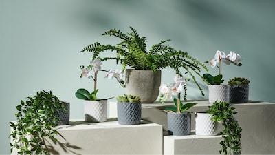 Plantes, pots et cache-pots