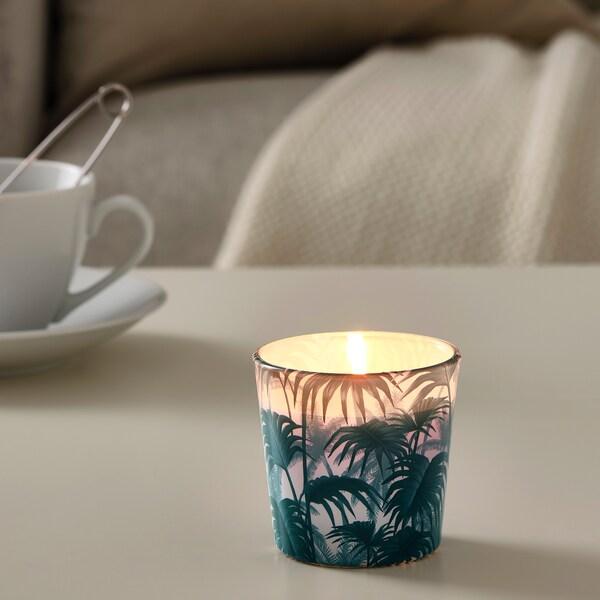 AVLÅNG svijeća bez mirisa u čaši palmin list zelena 7.5 cm 8 cm 25 h