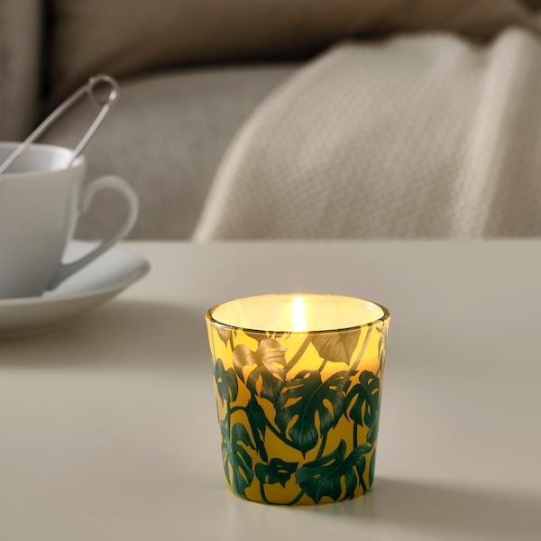 AVLÅNG svijeća bez mirisa u čaši monstera/list zelena 7.5 cm 8 cm 25 h