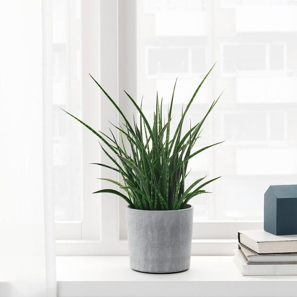 BOYSENBÄR Tegla za biljke, u zatvorenom/na otvorenom svijetlosiva, 12 cm