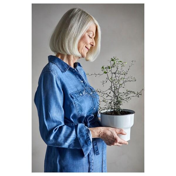 CITRONSYRA tegla za biljke u zatvorenom/na otvorenom/bijela 14 cm 17 cm 15 cm 16 cm