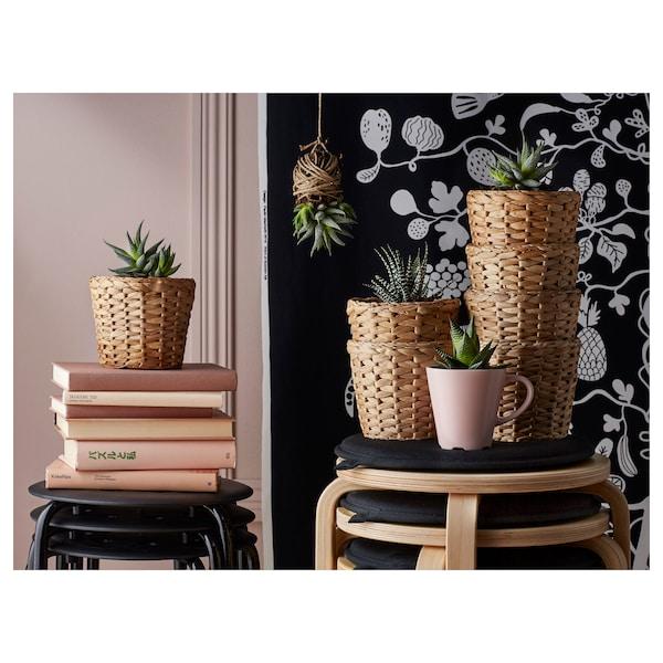 FRIDFULL Tegla za biljke, vodeni zumbul, 12 cm