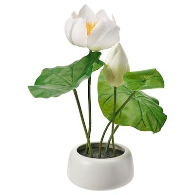 FEJKA cserepes műnövény+kaspó bel/kültér/Lótusz fehér 42 cm 18 cm