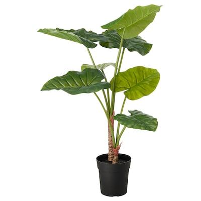 FEJKA Cserepes műnövény, bel/kültér alocasia, 19 cm