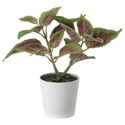 FEJKA Cserepes műnövény, bel/kültér Tarka virágcsalán, 6 cm