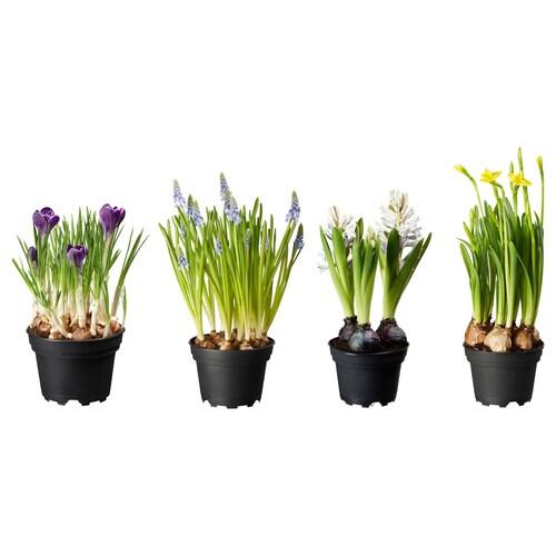IKEA LÖKARYD Növény