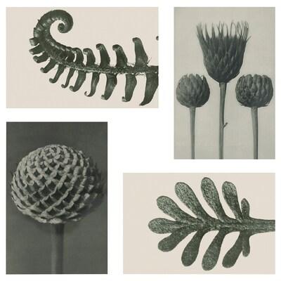 YLLEVAD Művészeti képeslap, botanikai mintázat, 10x15 cm