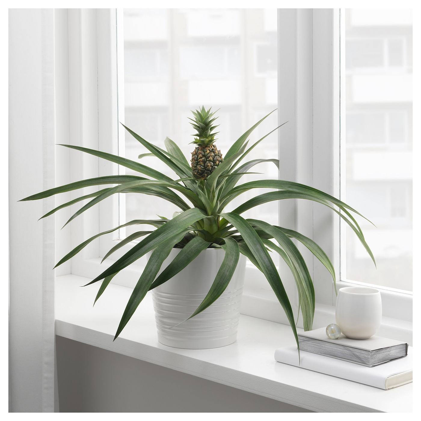 Ikea Ananas Potted Plant