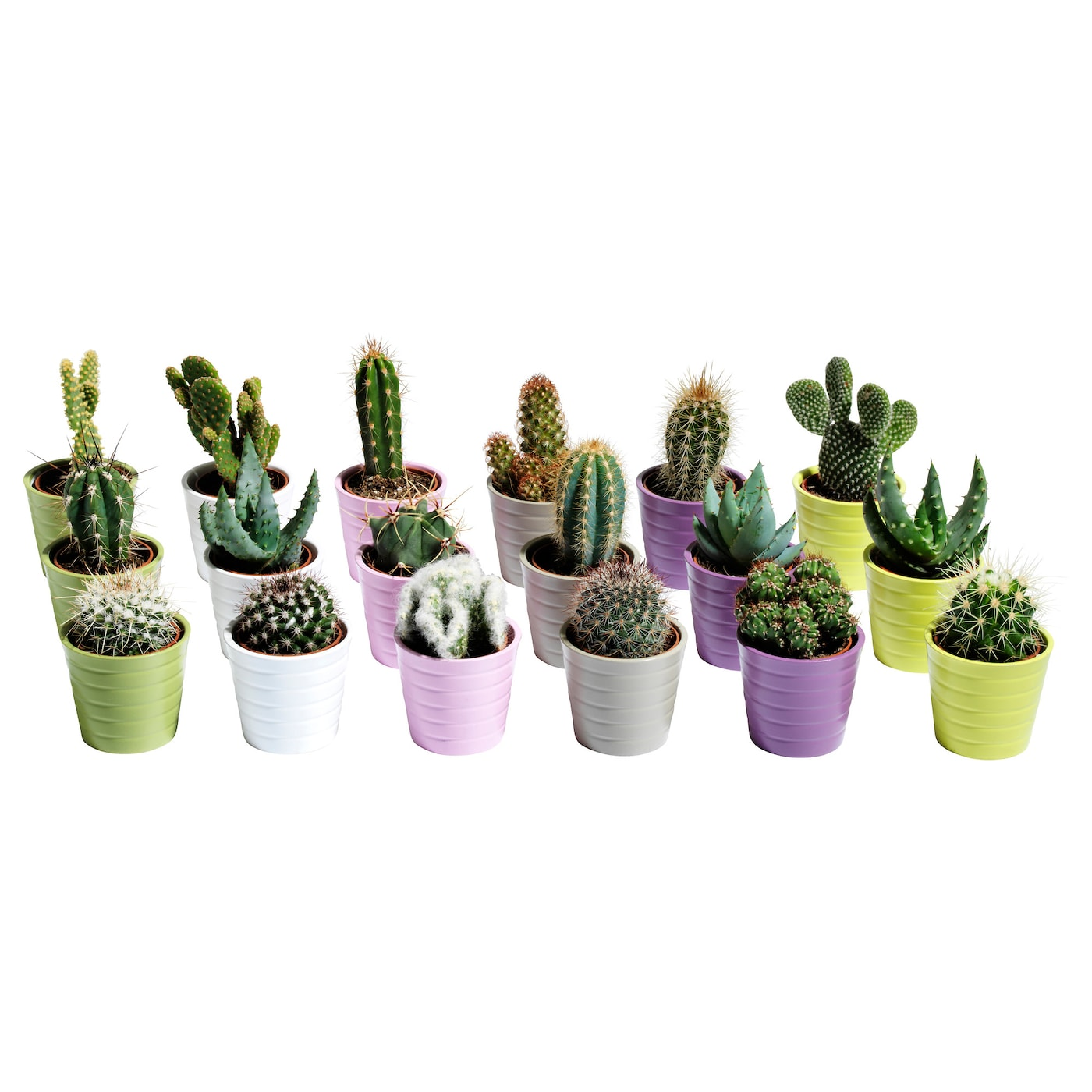 Cactaceae potted plant with pot cactus assorted 6 cm ikea for Vasi ceramica ikea