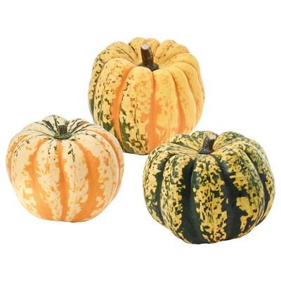 CUCURBITA Decoration pumpkin