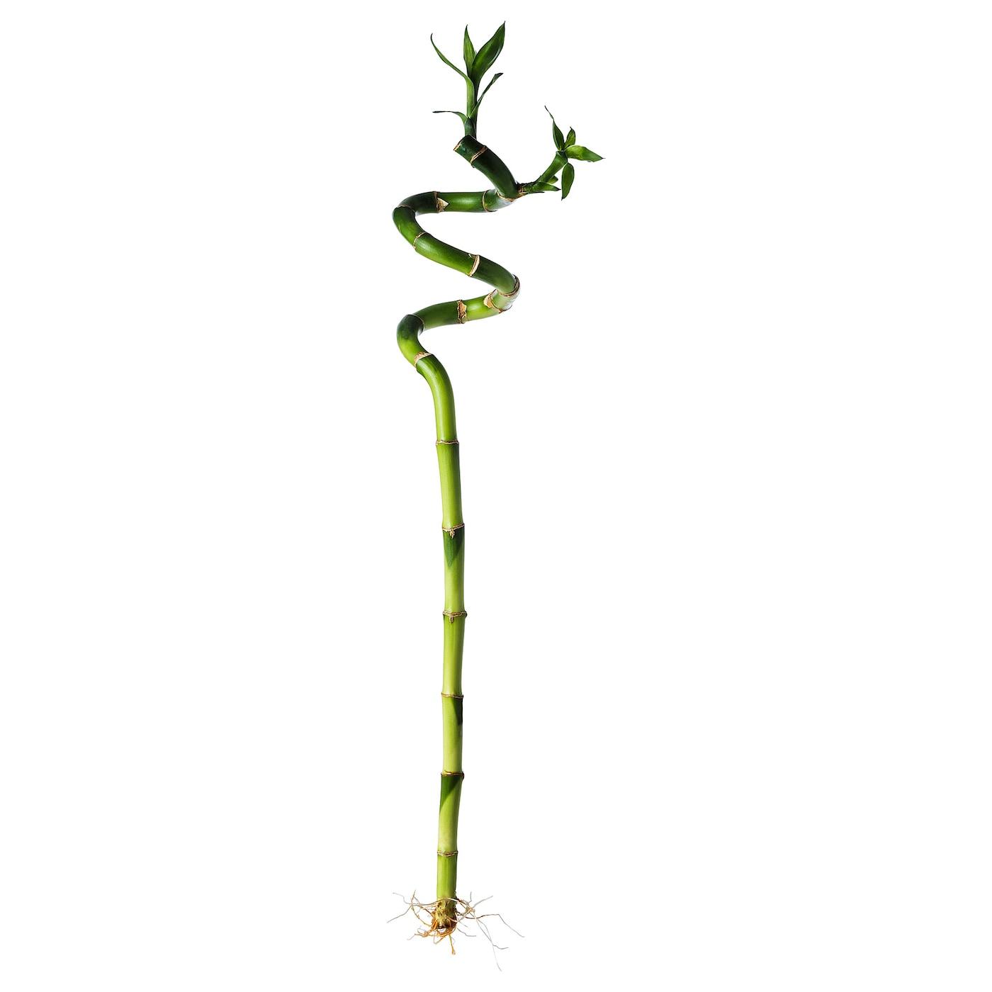 house plants & outdoor plants | ikea ireland - dublin
