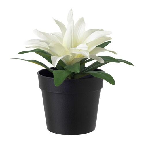 Fejka artificial potted plant bromeliad white 9 cm ikea - Ikea plante artificiel ...