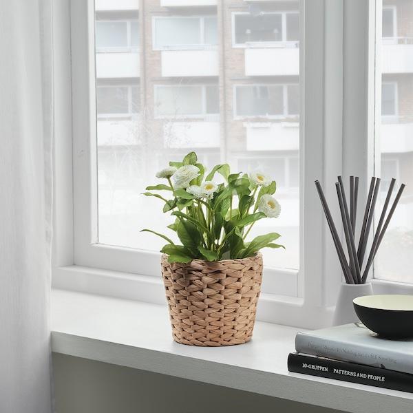 FRIDFULL Plant pot, water hyacinth, 12 cm