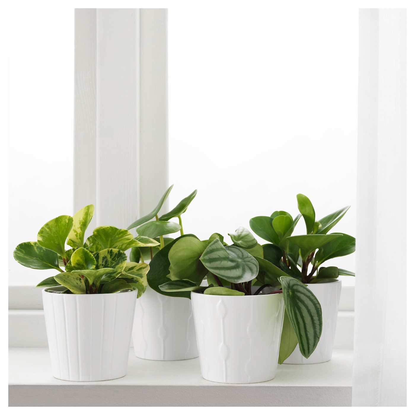 IKEA PEPEROMIA potted plant