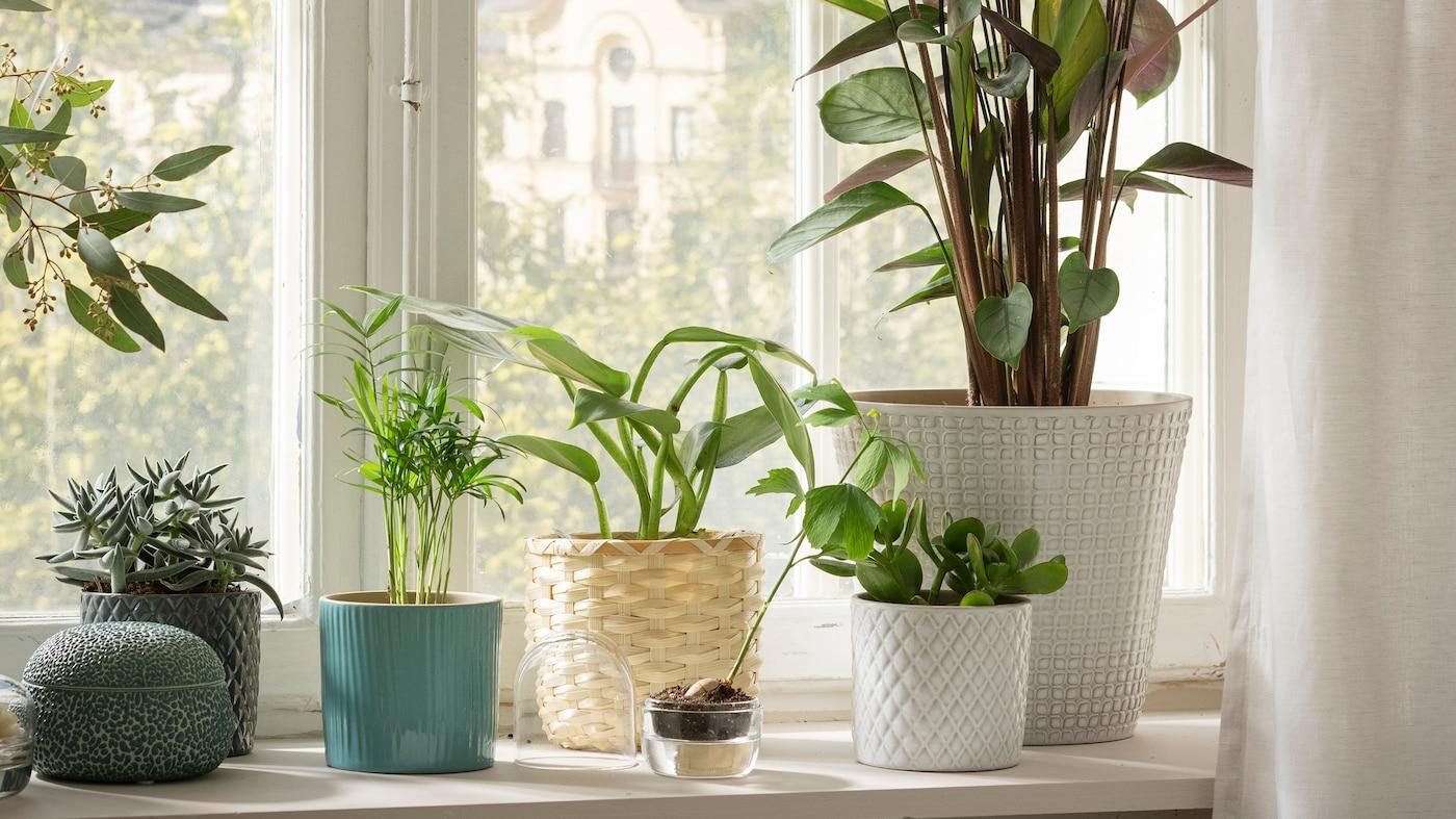 Die kraft der pflanzen ikea for Ikea kunstliche pflanzen