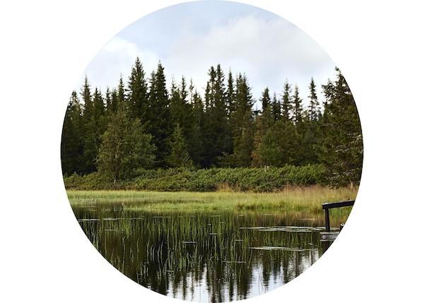 산의 호수에 비친 숲의 이미지