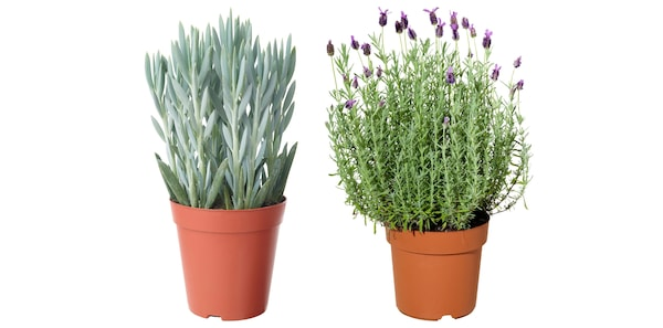 Plante şi ghivece pentru exterior