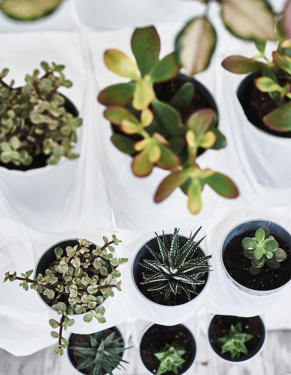 Small plants stacked inside a white hanging shoe organizer.