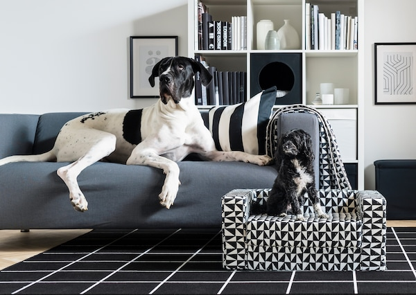 In a living room, a large Great Dane dog sits on top of a KLIPPAN sofa while a small black dog sits on a LURVIG dog bed beside it.