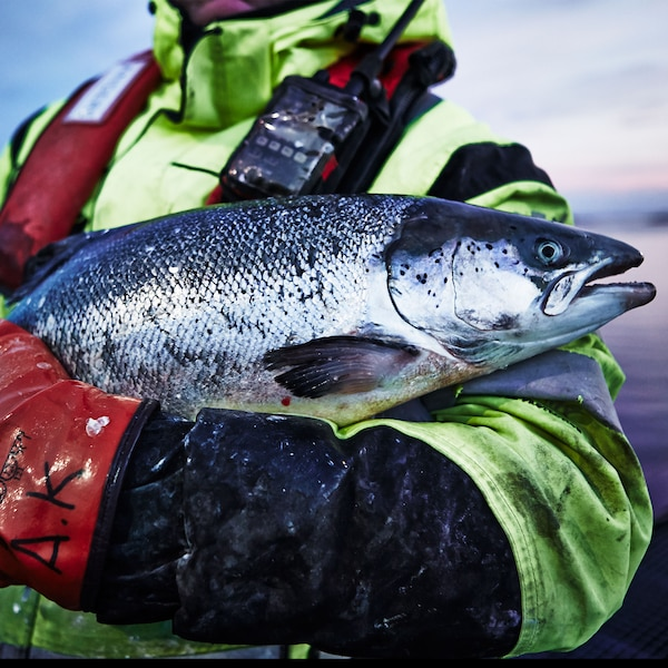 Our delicious salmon grows in the cool, clear waters of Norway. By the end of August 2015, it will only come from fish farms that have been certified by Aquaculture Stewardship Council. And to be ASC-certified, a fish farm must reach high standard of environmental and social responsibility.