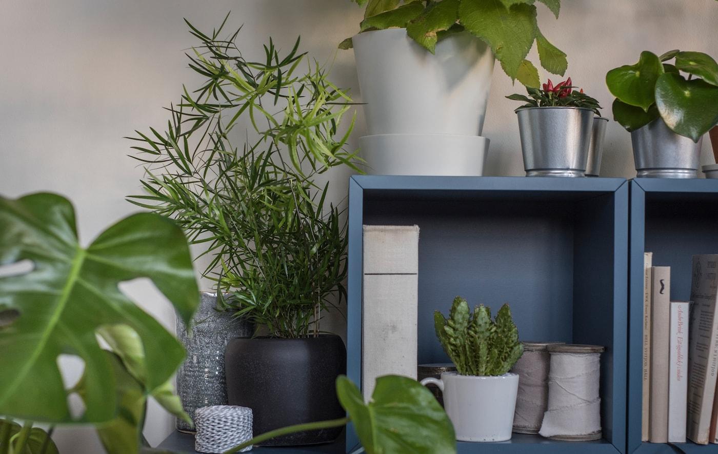2 armoires bleues empilées posées par terre dans un séjour, avec livres et plantes à l'intérieur et plantes tout autour.